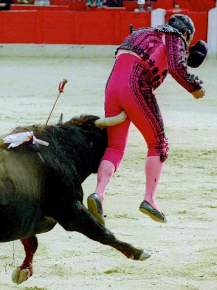 bull-horn-up-ass1.jpg