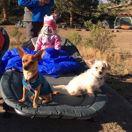 Tiny dogs and a tiny human