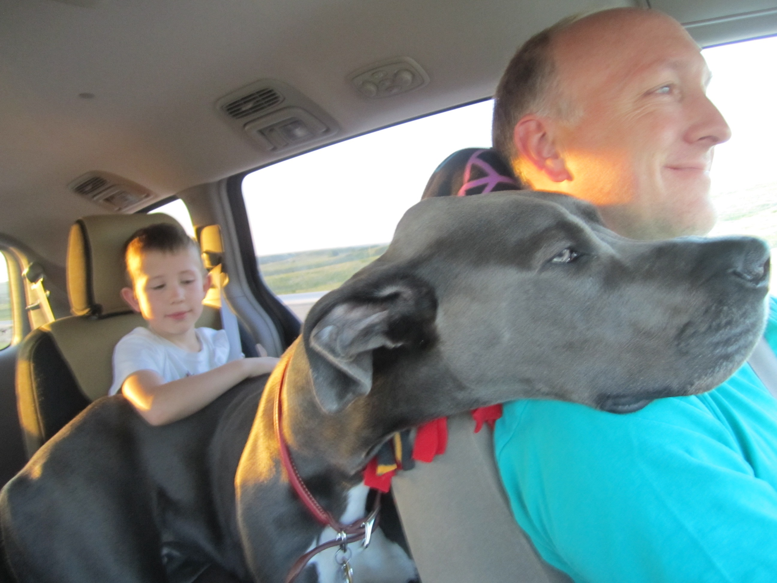 Blue is the best road trip dog ever.