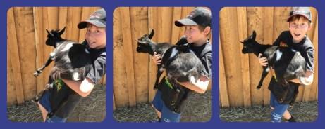 Micah Goat