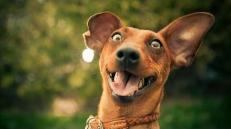 Funny-Compilation-Of-Excited-Dogs-Hilarious-Dog-Video.jpg