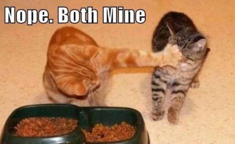 cat-both-are-mine.jpg