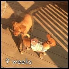 9 weeks