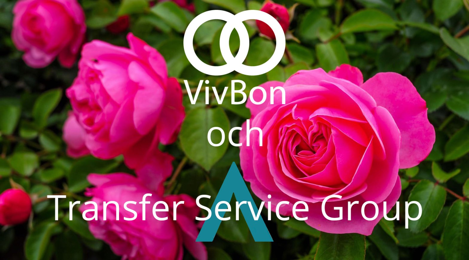 VivBon och Transfer Service Group
