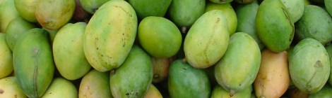 Memories on Trees: Mango