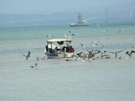 Birds Fisherman 2rev