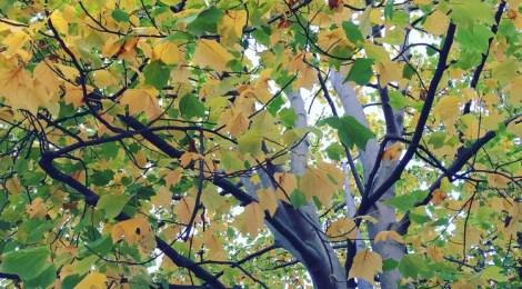 The Autumn Conversations