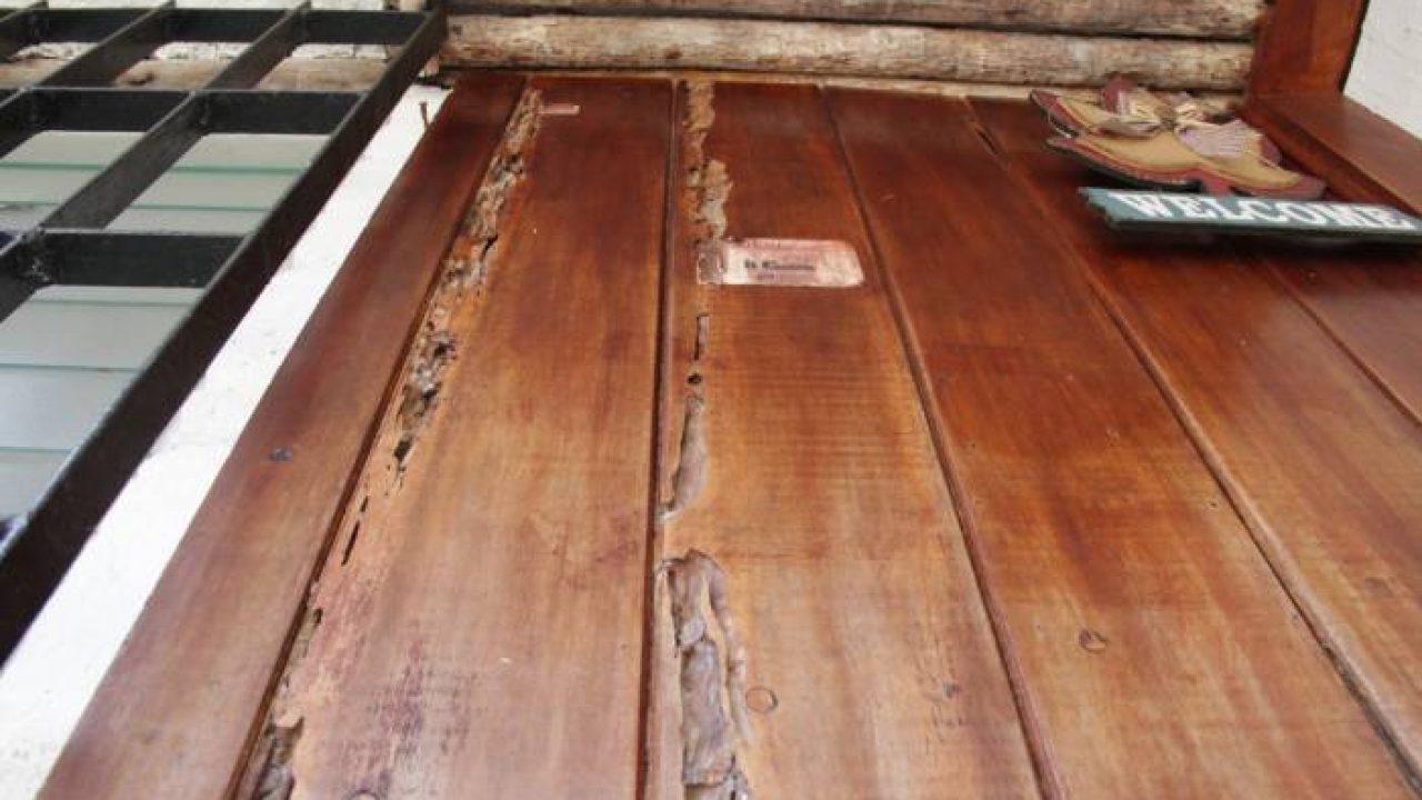 Servicios y proceso de fumigación de termitas