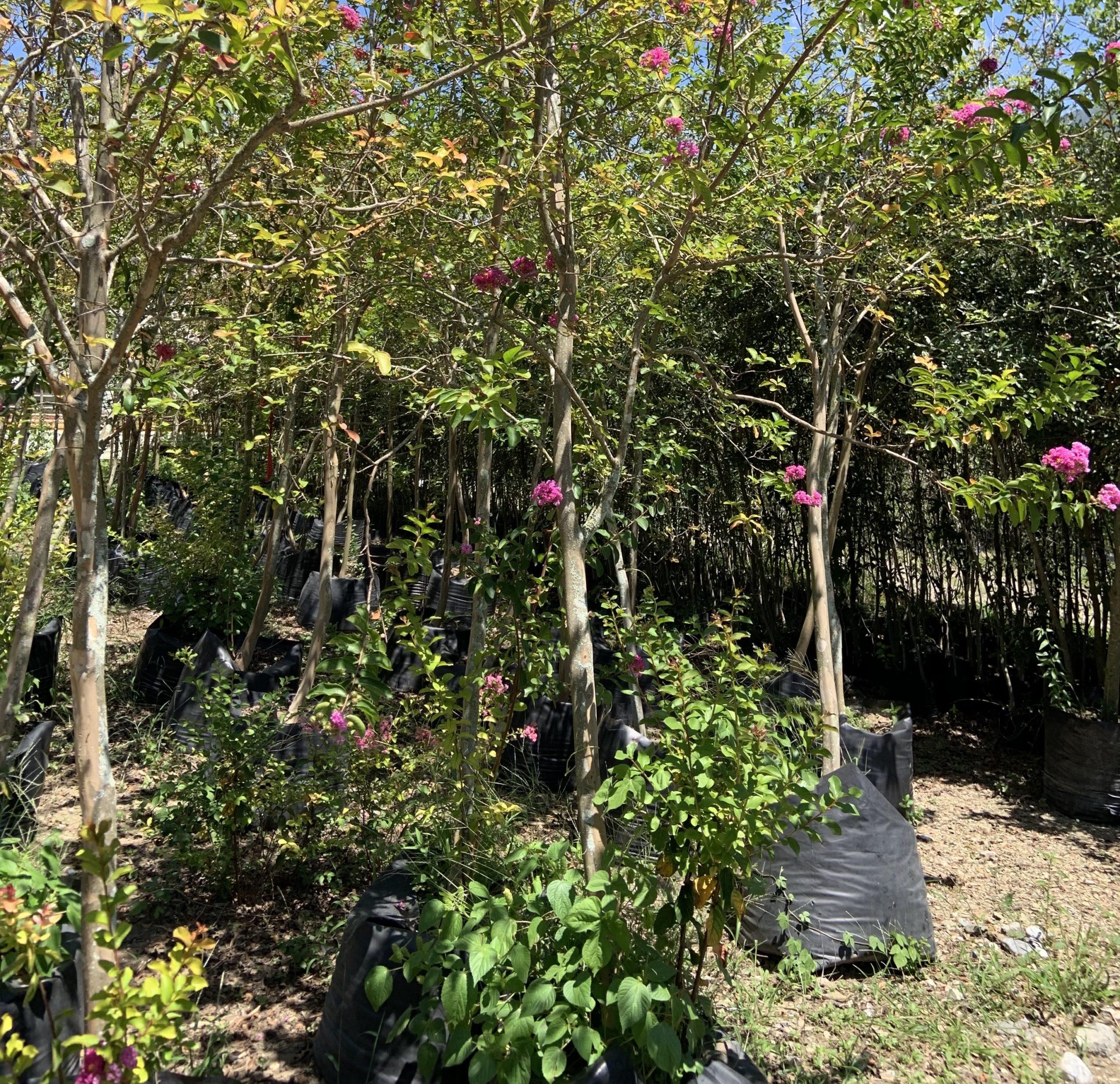 Arboles Florales