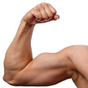 Come sviluppare i muscoli delle braccia  Vivere al Meglio