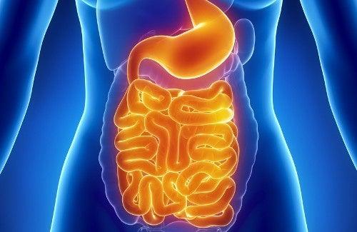 Risultati immagini per flora intestinale