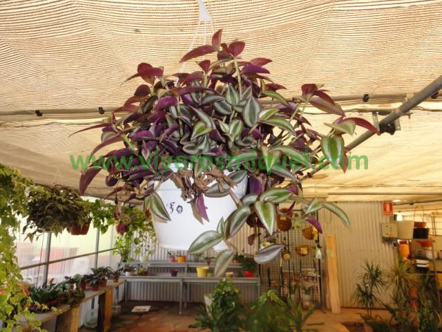 cheap best posted with plantas de interior colgantes with plantas colgantes interior with plantas interior colgantes with plantas colgantes de interior - Plantas Colgantes De Interior