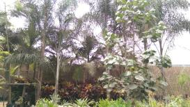NUESTRAS PLANTAS