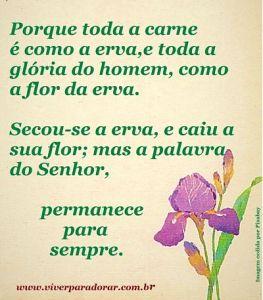 A glória do homem é como a flor da erva.