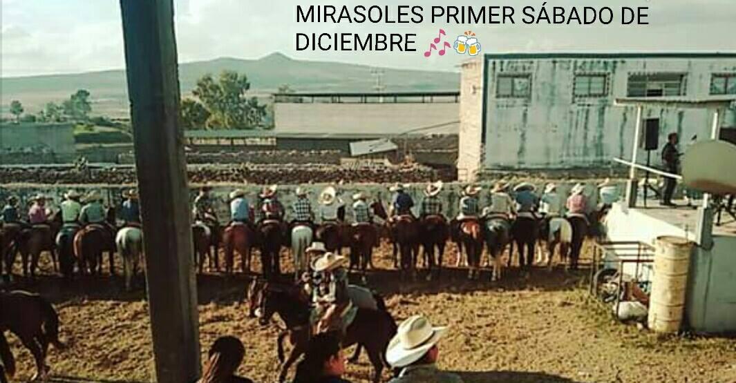 Coleadera de Los Mirasoles