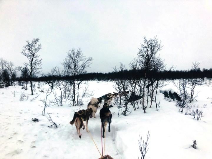 Dronefilm av hundesleden i fin flyt