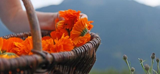 Eventi in Alto Adige: il festival della salute di Merano