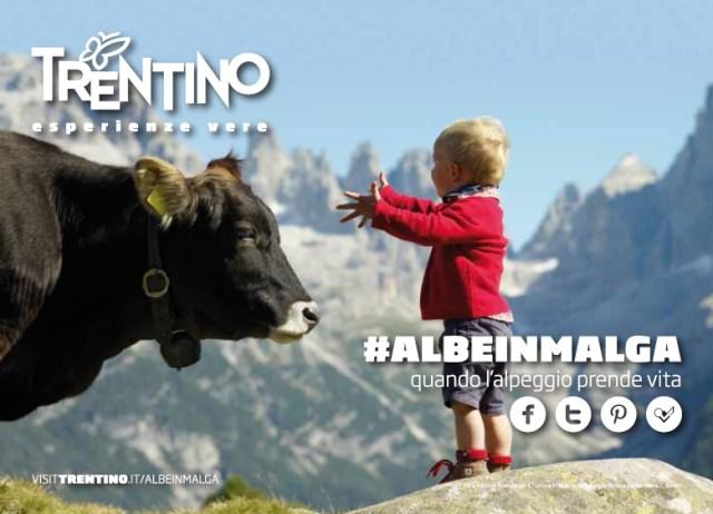 Albe in Malga – una giornata in alpeggio in Trentino