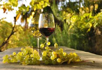Etica Vitis – la vendita online del vino biologico e biodinamico