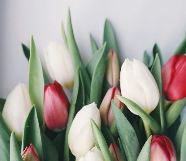 Piantare tulipani a dicembre (con il proprio bambino)