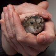 Bebop de hamster - large - 4377632868
