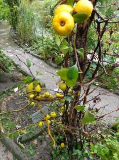 Padua botanic garden