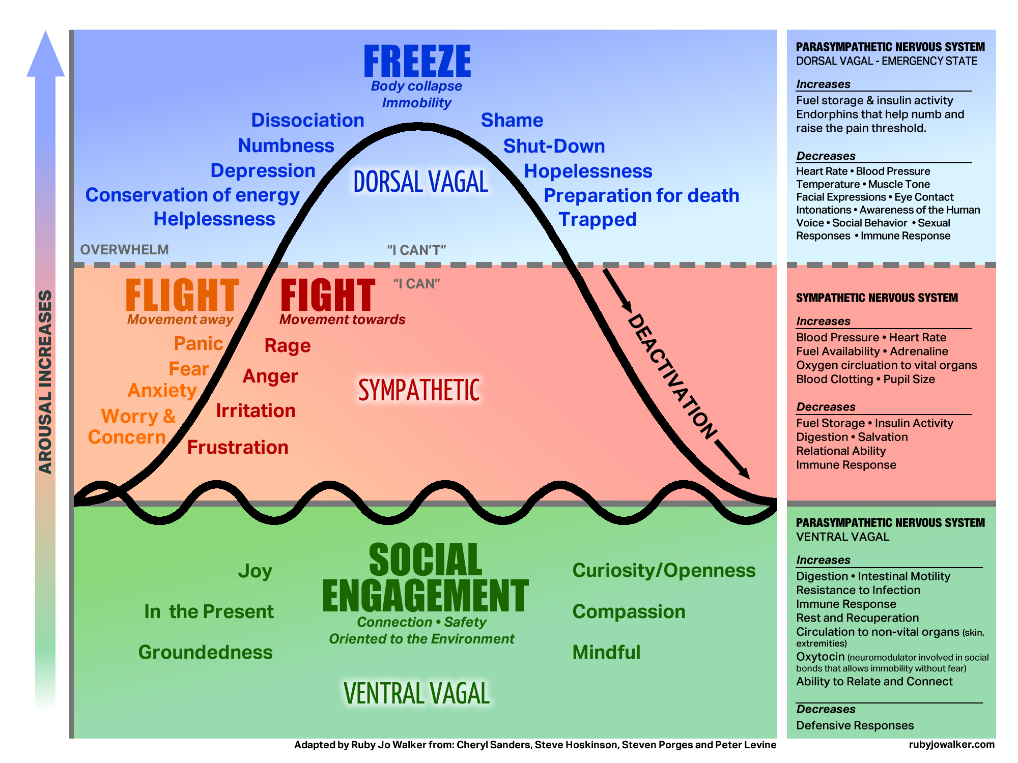 Polyvagal Theory Fight Freeze Or Engage