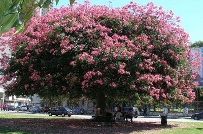 Il Palo borracho: un albero che nasce tragicamente