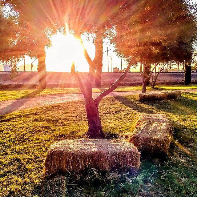 Evening sunrays.  #sunshine #sunsets #goldenhour #cellphonephotography #golden #goldenlight #sunrays #amateurphotography #amateurphotographer