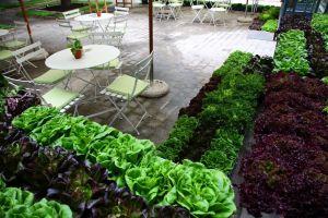 El paisajista Jaimede Juanes decoró el espacio con una selección de vegetales frescos recién recolectados en las huertas de Florette.