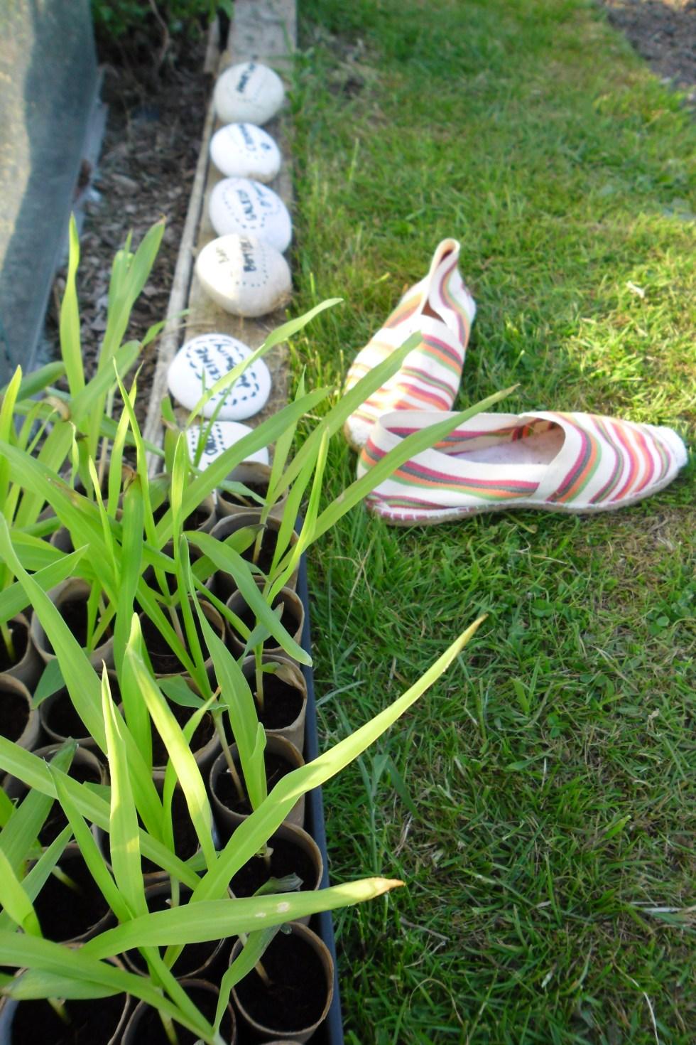 May - shoesoff