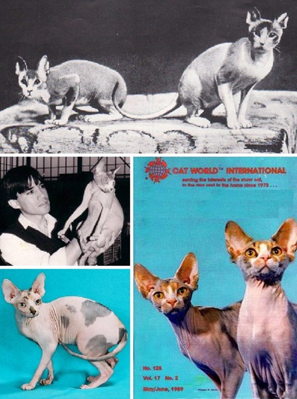 sphynx_cats_5a