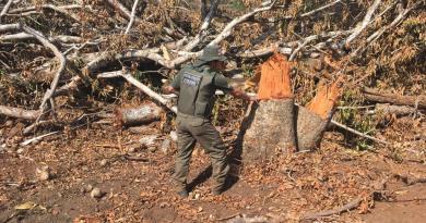 Semad-GO e Polícia Ambiental flagram desmatamento irregular em Itapirapuã