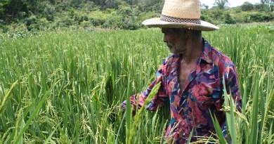 Ruraltins desenvolve ações estratégicas e beneficiam milhares de produtores no primeiro semestre de 2019