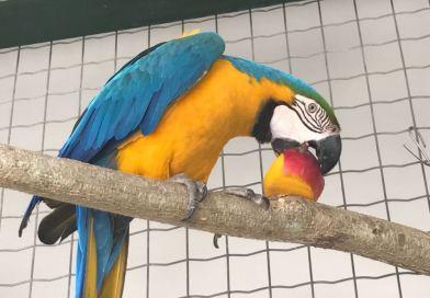 Tocantins registra redução nas demandas de assistência aos animais silvestres em 2020