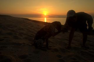 chien maroc mer plage