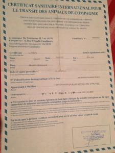 certificat sanitaire internationale chien vétérinaire maroc
