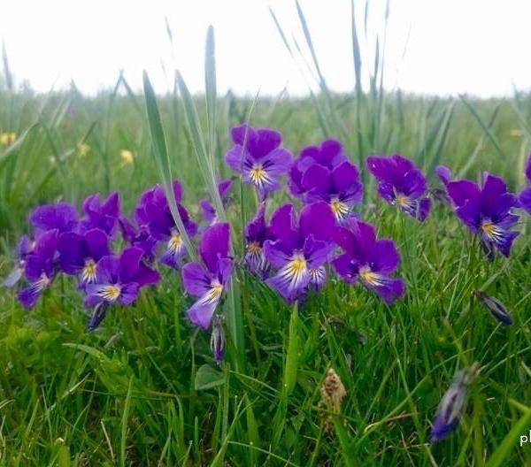 Haïkus du printemps (suite)