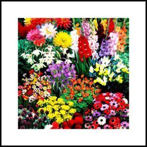 Cvijeće & Lukovice