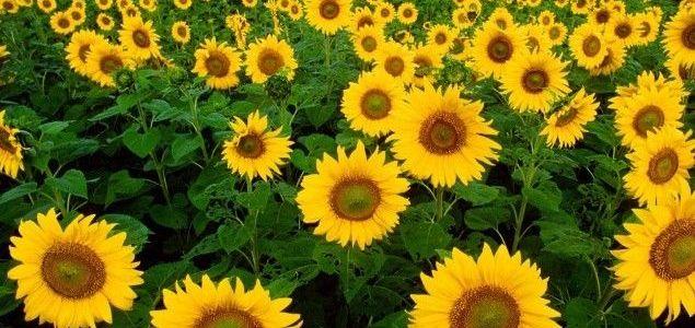 Cvijeće u vrtu