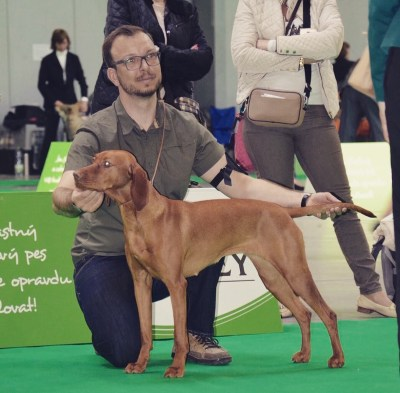 MVP Prague Expo Dog 30.4.2016