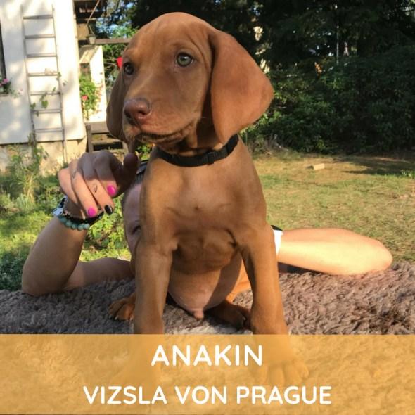 Anakin Vizsla von Prague