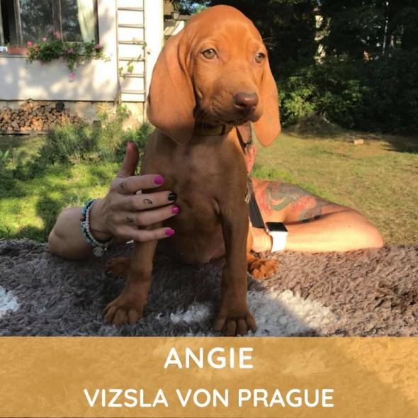Angie Vizsla von Prague