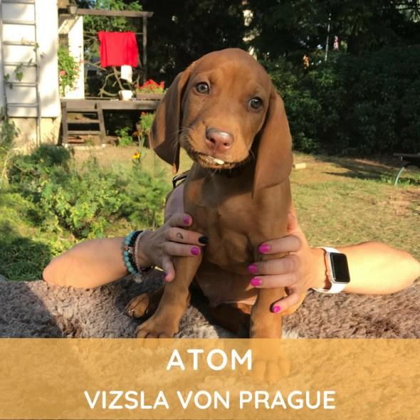 Atom Vizsla von Prague