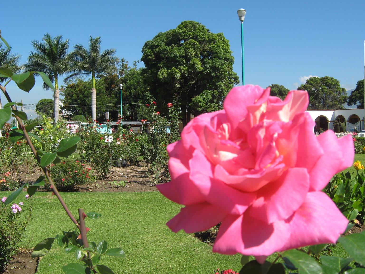 Se uso como primer plano el paisaje, dejando un poco desenfocada la rosa del frente