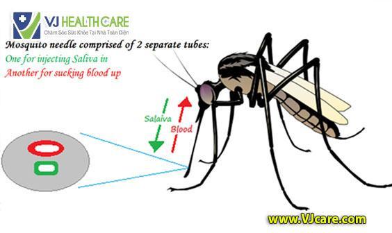tai sao hiv khong lay qua duong muoi dot muoi chich ASIA Health