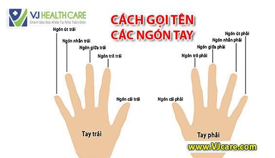 cách gọi tên các ngón tay thứ tự các ngón tay