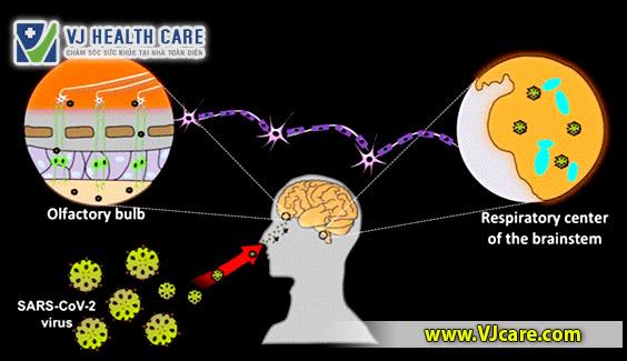 SARS-CoV-2 virus brain damage virus covid19 tan cong nao
