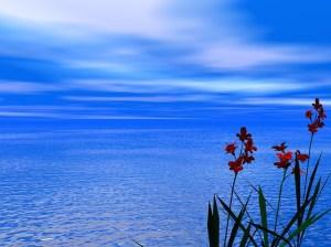 Blumen Meeresrauschen