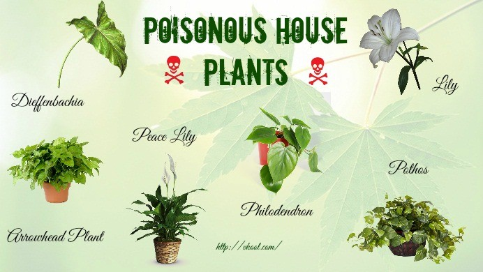 Flowers And Plants Poisonous To Cats